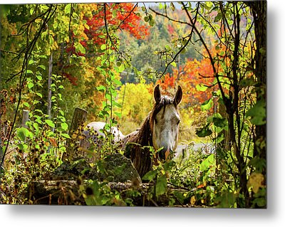 Metal Print featuring the photograph Are You My Friend? by Jeff Folger