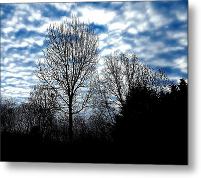Ash Trees Against A Mackerel Sky Metal Print