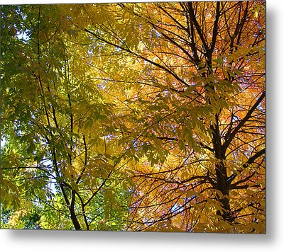 Ashland Autumn Metal Print by John Norman Stewart