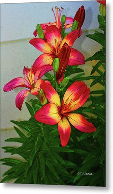 Asian Lilly Spring Time Metal Print