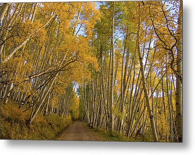 Metal Print featuring the photograph Aspen Alley by Steve Stuller