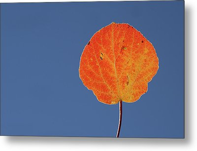 Metal Print featuring the photograph Aspen Leaf 1 by Marie Leslie