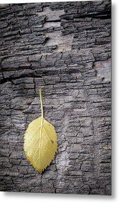 Aspen Leaf On Bark Metal Print