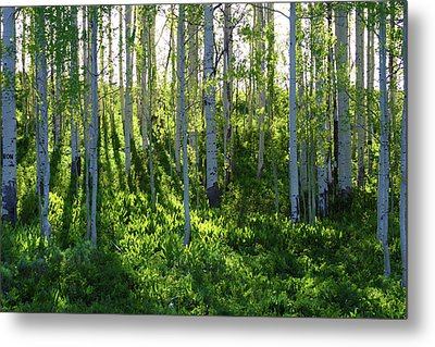 Metal Print featuring the photograph Aspen Morning 1 by Marie Leslie
