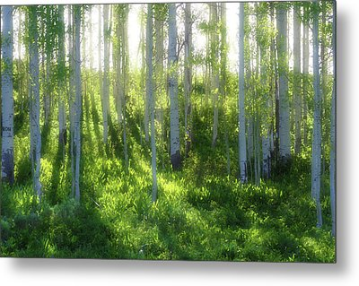 Metal Print featuring the photograph Aspen Morning 3 by Marie Leslie