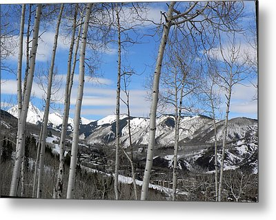 Aspen Trees In Snowmass Metal Print