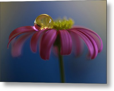 At Ease Metal Print by Kym Clarke