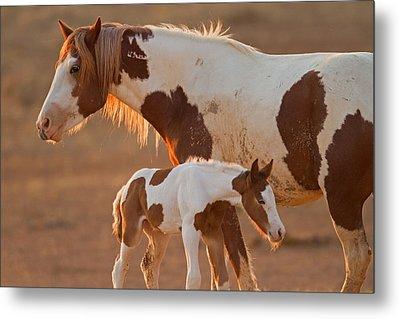 August Foal Metal Print