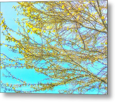 Metal Print featuring the photograph  Aura Of Springtime by Connie Handscomb