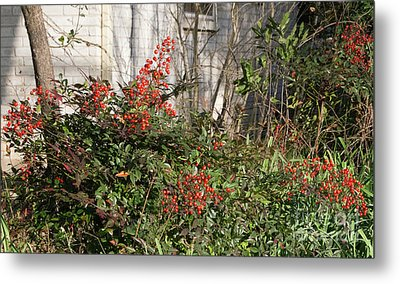 Metal Print featuring the photograph Austin Winter Berries by Linda Phelps