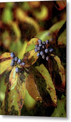 Autumn Berries 6047 Dp_2 Metal Print