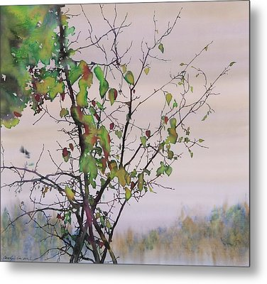 Autumn Birch By Sand Creek Metal Print