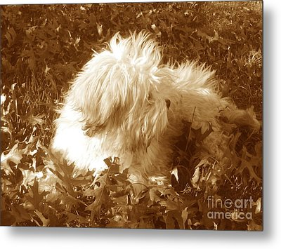 Metal Print featuring the photograph Autumn Breeze 2 by Reina Resto