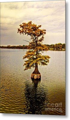 Autumn Cypress Metal Print by Scott Pellegrin