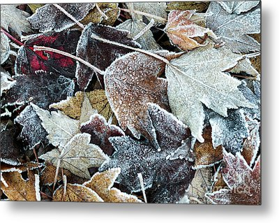 Metal Print featuring the photograph Autumn Ends, Winter Begins 1 by Linda Lees