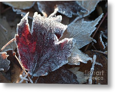 Metal Print featuring the photograph Autumn Ends, Winter Begins 2 by Linda Lees