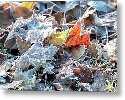 Metal Print featuring the photograph Autumn Ends, Winter Begins 3 by Linda Lees