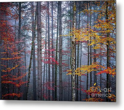 Autumn Forest In Fog Metal Print