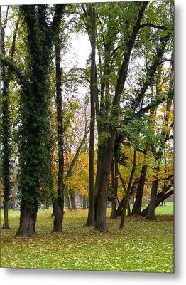 Autumn In City Park Nature Photography Metal Print by S Art