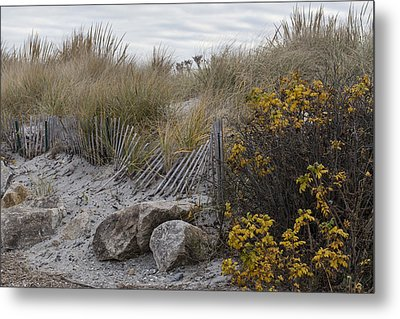 Metal Print featuring the photograph Autumn In The Dunes by Andrew Pacheco