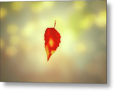 Autumn Leaf Metal Print by Bob Orsillo