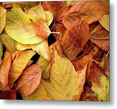 Autumn Leaves Metal Print by Carlos Caetano