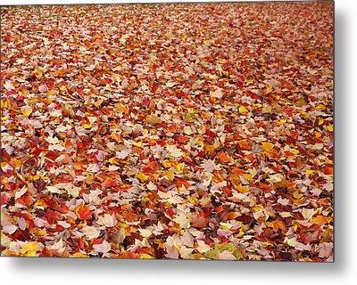 Autumn Leaves Metal Print by Marilyn Wilson