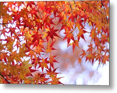 Autumn Leaves Metal Print by Myu-myu