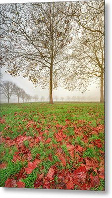 Metal Print featuring the photograph Autumn Leaves Near To Far Super High Resolution by William Lee
