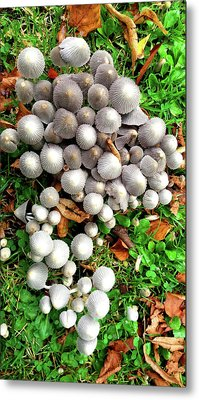 Autumn Mushrooms Metal Print