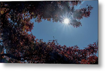 Autumn Oak And Sun Metal Print by Mick Anderson
