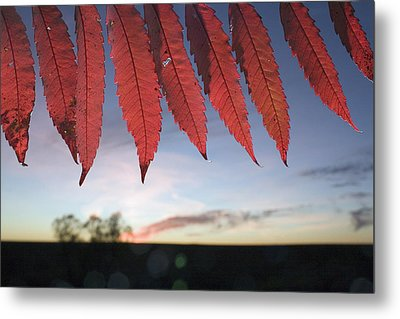 Autumn Red Sumac Leaves Metal Print by Jim Richardson
