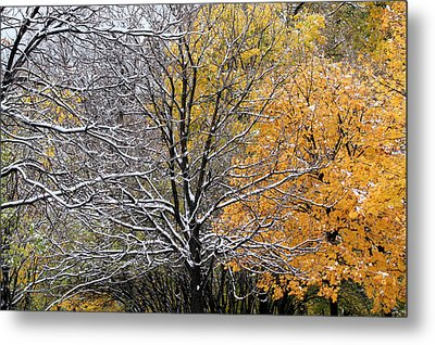 Metal Print featuring the photograph Autumn Snow by Doris Potter
