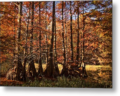 Metal Print featuring the photograph Autumn Splendor At Lake Murray by Tamyra Ayles