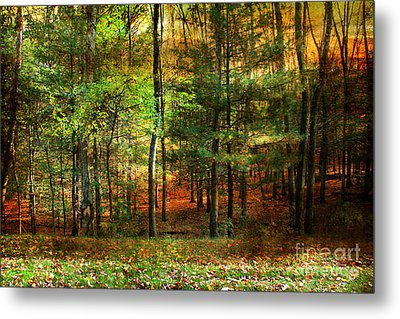 Autumn Sunset - In The Woods Metal Print