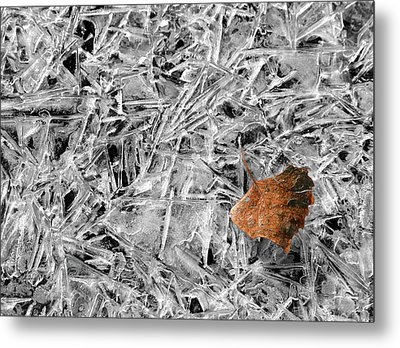 Metal Print featuring the photograph Autumn's End by Marie Leslie