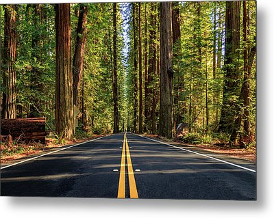 Metal Print featuring the photograph Avenue Of The Giants by James Eddy