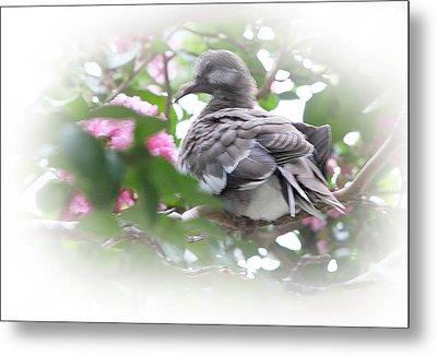 Baby Bird In Crape Myrtle Tree Metal Print by Linda Phelps