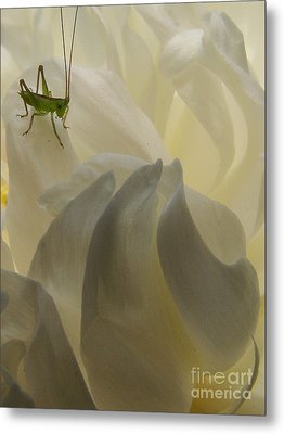Baby Bud Metal Print by Mark Holbrook
