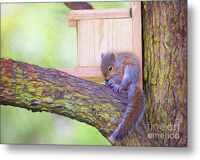 Baby Squirrel In The Tree Metal Print