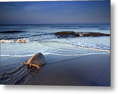 Back To The Sea Metal Print by Edward Kreis