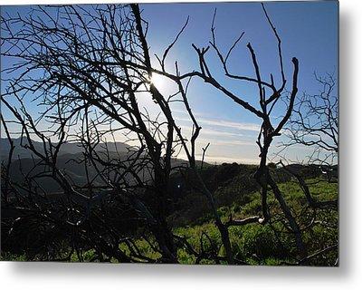 Metal Print featuring the photograph Backlit Trees Overlooking Hillside by Matt Harang