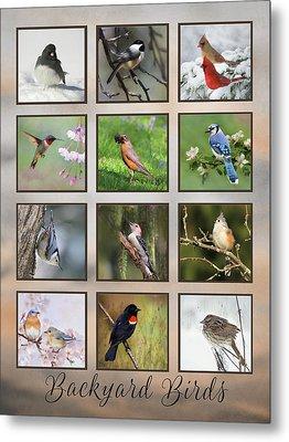 Backyard Birds Metal Print by Lori Deiter