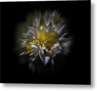 Metal Print featuring the photograph Backyard Flowers 25 Color Flow Version by Brian Carson