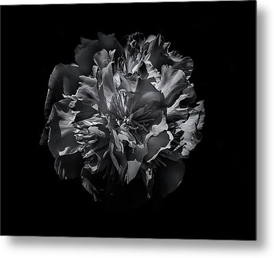 Metal Print featuring the photograph Backyard Flowers In Black And White 25 by Brian Carson