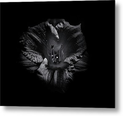 Metal Print featuring the photograph Backyard Flowers In Black And White 26 by Brian Carson