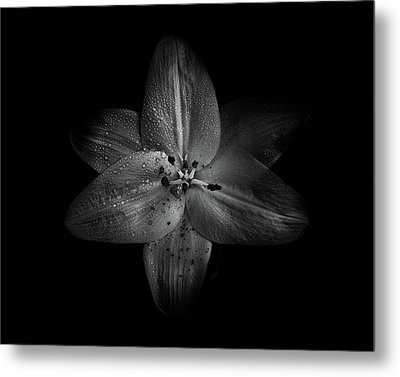 Metal Print featuring the photograph Backyard Flowers In Black And White 28 by Brian Carson