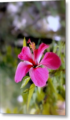 Bahamian Flower Metal Print by Deborah  Crew-Johnson