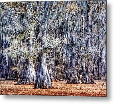 Bald Cypress In Caddo Lake Metal Print