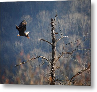 Bald Eagle At Boxley Mill Pond Metal Print by Michael Dougherty